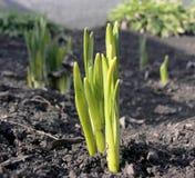 Unga växter Royaltyfri Foto