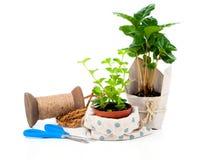 Unga växter i det packe erbjudna till salu Royaltyfri Fotografi
