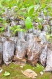 Unga växter i små plastpåsar Arkivbilder