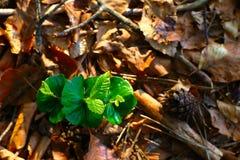 Unga växter i vårskog Arkivbilder