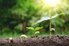 Unga växter som växer från, kärnar ur moment upp i natur med ferten Arkivfoto