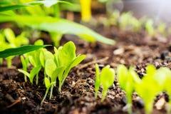 Unga växter, unga träd i sängen Fotografering för Bildbyråer