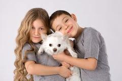 Ungar med den vita hunden som isoleras på grå bakgrund Ungar daltar kamratskap Chihuahua arkivfoto