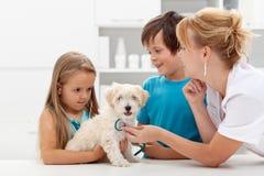 Ungar på det veterinär- manipulerar med deras husdjur royaltyfri fotografi