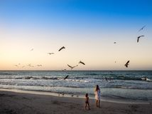 Ungar på stranden som håller ögonen på havsfåglarna royaltyfria foton
