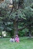 Ungar sörjer under trädet Royaltyfri Fotografi