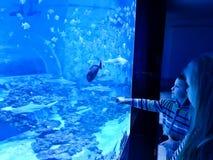 Ungar som beundrar det stora akvariet med hajar och den exotiska fisken Arkivbilder