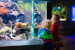 Ungar som håller ögonen på fisken i tropiskt akvarium Arkivbild
