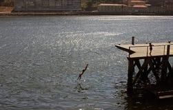 Ungar som har gyckel i Porto, Portugal Arkivfoton