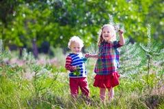 Ungar som leker i höstpark Arkivfoton