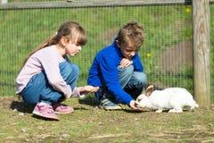 Ungar som matar kaniner Royaltyfri Foto