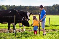 Ungar som matar kon på en lantgård Royaltyfri Fotografi