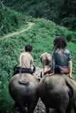 Ungar som rider vattenbufflar i bergen royaltyfri fotografi