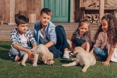 Ungar som spelar med gulliga labrador valpar Royaltyfri Foto