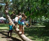 Ungar som spelar på palmträdet Arkivfoton