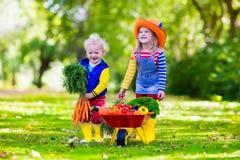 Ungar som väljer grönsaker på organisk lantgård royaltyfria bilder