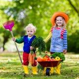 Ungar som väljer grönsaker på organisk lantgård Arkivfoto