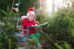 Ungar som väljer julgranen Shoppa för Xmas-gåvor arkivfoto