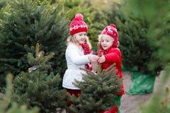 Ungar som väljer julgranen Shoppa för Xmas-gåvor royaltyfri fotografi