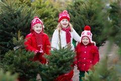Ungar som väljer julgranen Shoppa för Xmas-gåvor royaltyfri bild