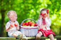 Ungar som väljer nya äpplen Arkivbilder