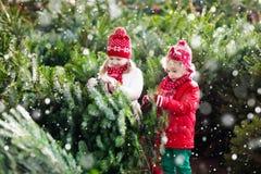 Ungar väljer julgranen Familj som köper Xmas-trädet arkivbild
