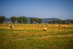 Ungarische Landschaft, große Felder mit Heu Stockbild