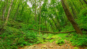 Ungarischer Wald Lizenzfreies Stockbild