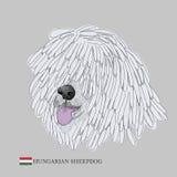 Ungarisches Schäferhundporträt Stockbilder