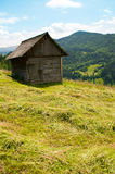 Ungathered hay. Hay waiting to be gathered near a barn on a hillside Royalty Free Stock Image