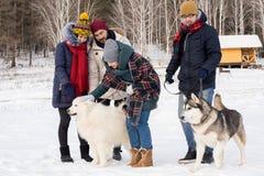 Ungdomarsom spelar med Husky Dogs arkivfoton