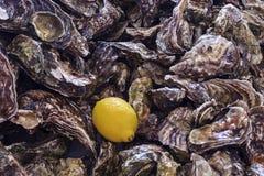 Ungeöffnete Austern und zitronengelb Lizenzfreie Stockbilder