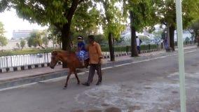 Unge i en mini- häst Arkivbilder