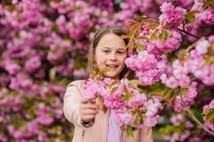 Unge p? rosa bakgrund f?r blommasakura tr?d Allergibot Barnet tycker om liv utan allergi Sniffa blommor flicka fotografering för bildbyråer