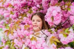 Unge p? rosa bakgrund f?r blommasakura tr?d Barnet tycker om liv utan allergi Sniffa blommor Allergibot pollen fotografering för bildbyråer