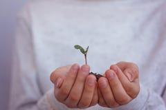Unge som rymmer den nya grodden i händer Symbol av det nya liv- och ekologibegreppet Arkivfoto