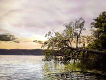 Ungeanseende på ett stupat träd som hoppar på vattnet royaltyfri foto