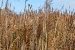 Ungebildetes Landwirtschaftsfeld mit wild wachsenden Pflanzen Stockfotos