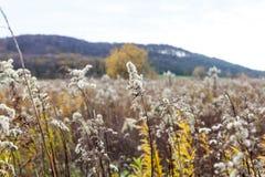 Ungebildetes Landwirtschaftsfeld mit wild wachsenden Pflanzen Stockbild