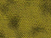 ungefärlig textur för reptil Arkivfoto