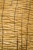 Ungefärligt behandlat med closeupen för stämjärnekplanka royaltyfri fotografi