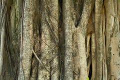 Ungefärligt treeskäll för unik textur Royaltyfria Bilder