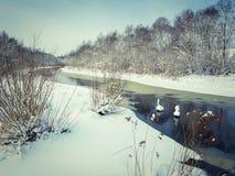 Ungefrorene Flusswinterlandschaft mit blaues Wasser und Bäume covere Lizenzfreie Stockfotografie