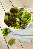 Blattkopfsalat stockfoto