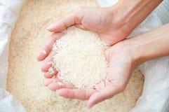 Ungekochter Reis Stockbilder