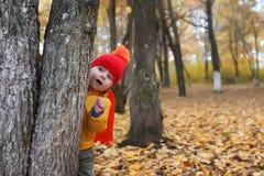 Ungen i höst parkerar det gömda behind trädet Royaltyfria Foton