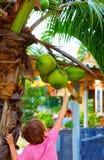 Ungen skördar de unga kokosnötterna i tropisk trädgård Arkivfoton