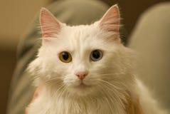 Ungerade gemusterte Katze Lizenzfreies Stockfoto