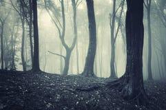 Ungerader schauender Baum in der Leuchte in einem nebeligen geheimnisvollen Wald Stockfoto