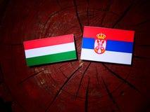 Ungersk flagga med den serbiska flaggan på en trädstubbe Royaltyfria Foton